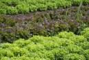 S'obre la convocatòria per l'adjudicació dels horts municipals i socials en el terme municipal de Banyeres del Penedès